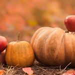 Pumpkin Patches & Apple Orhcards